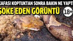 Kafası kopan dev yılan bakın ne yaptı?