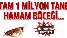 1 milyon hamam böceği firar etti!