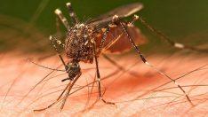 Sivrisineklerden kurtulmak için müthiş çözüm!